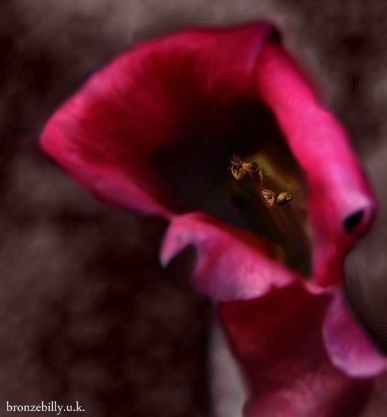 pink focus bokeh flower bronzebilly