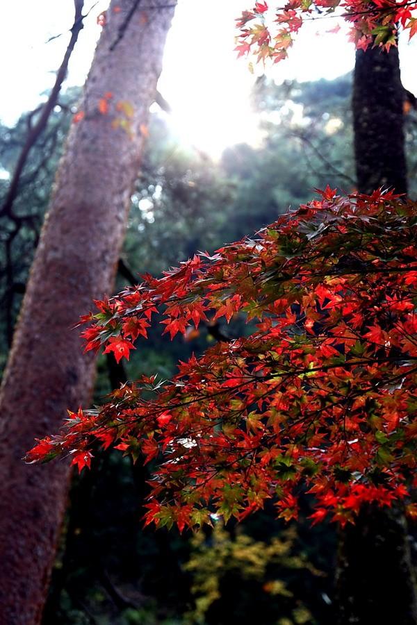 Autumn....still.