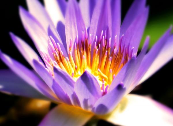 Flower part 4