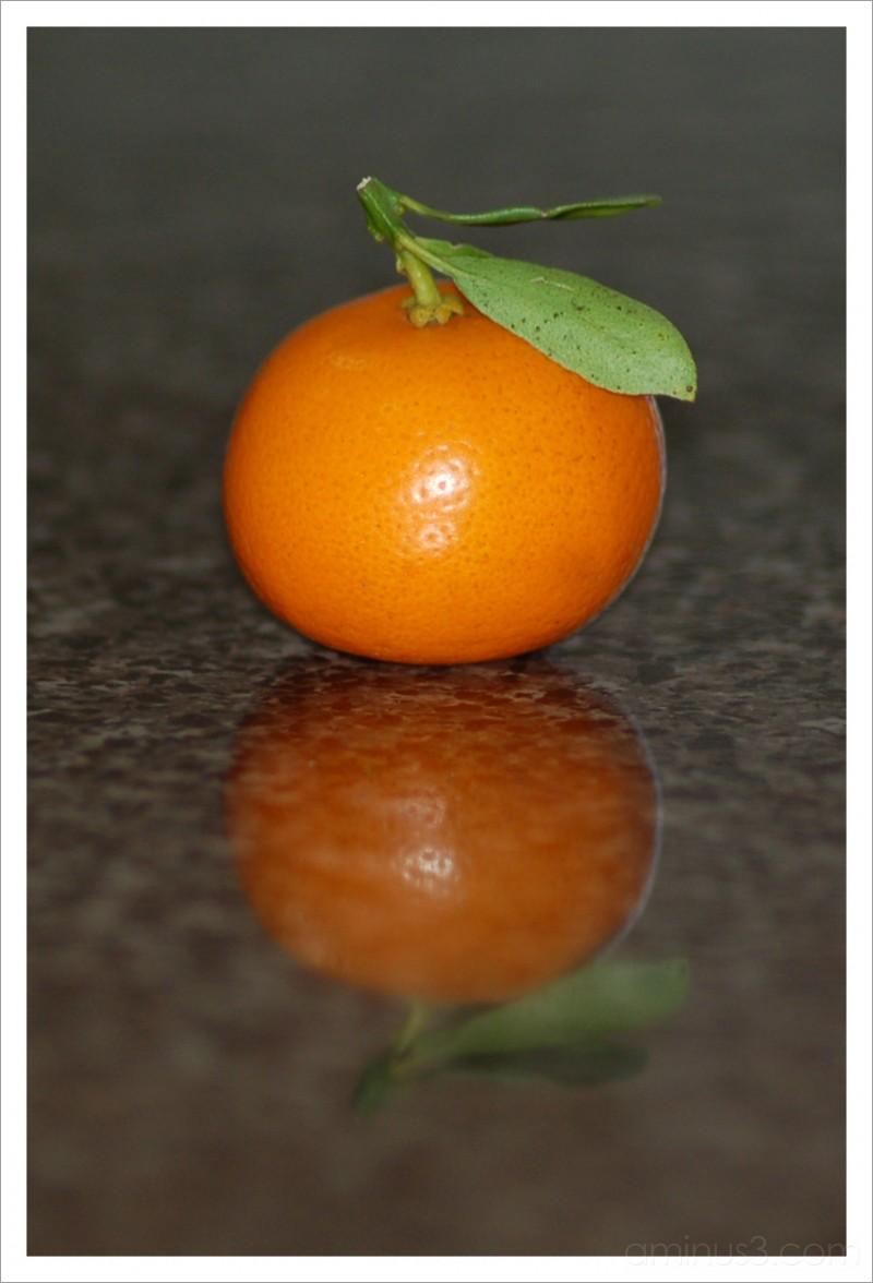 Sour Kumquat