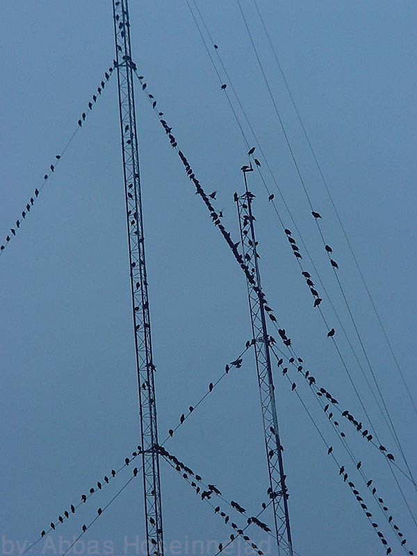 Birds & Cables پرندهها و سيمها
