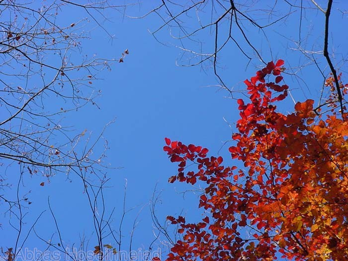 Autumn's Depth
