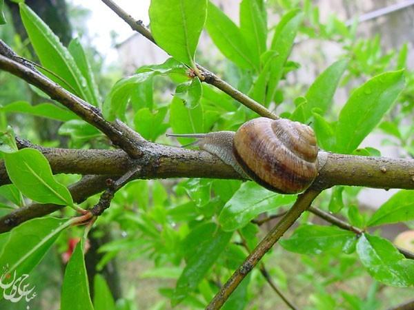 Snail(2)