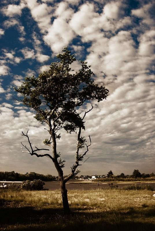 Just a Tree Edited