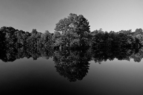Optical illusion tree reflection in Manny's pond