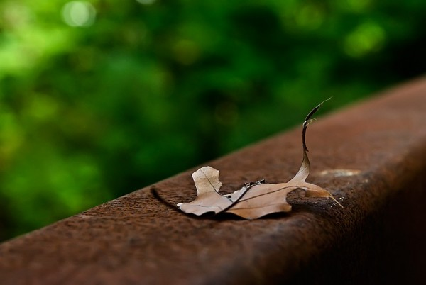 leaf on a rail