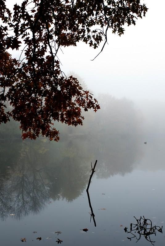 alone in a fog