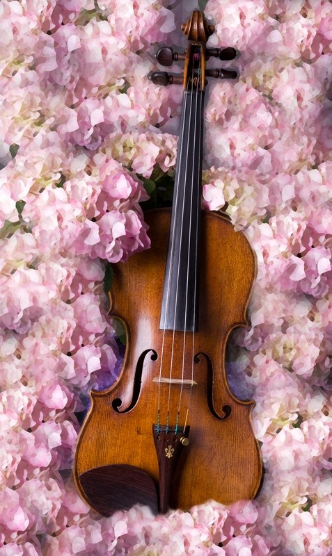 violin on a bed of hydrangeas