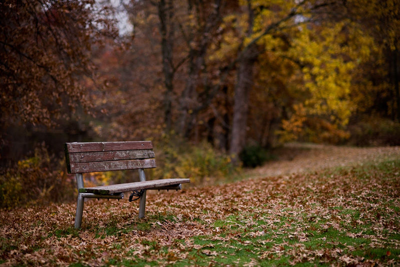 Mohawk Park Bench Thanksgiving Thoughts