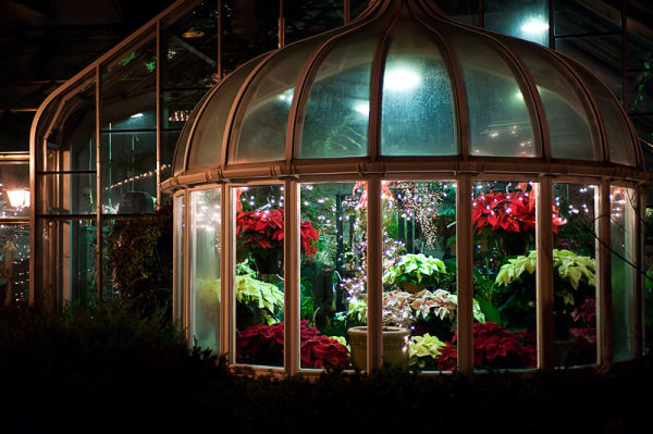 Christmas Greenhouse