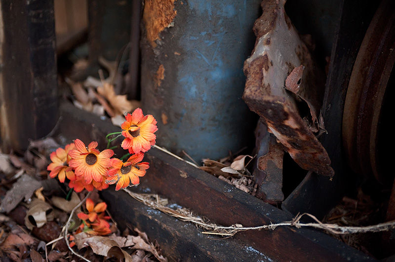 Silk Flowers in abandoned Morris County NJ Barn