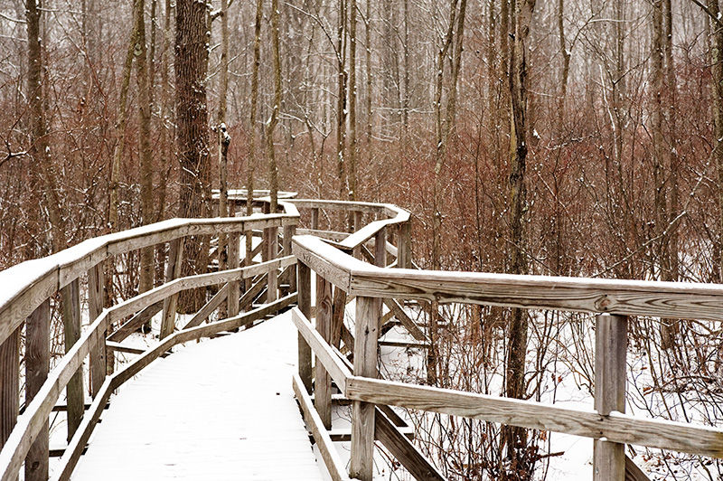 Great Swamp walkway in winter during light snow