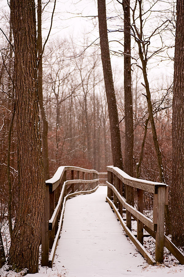 Great Swamp walkway winter vertical in light snow