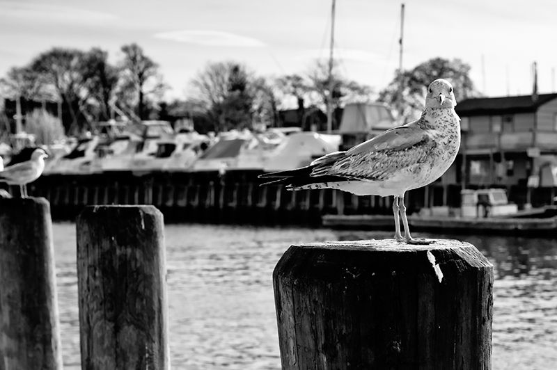 A gull on a pole in keyport new jersey
