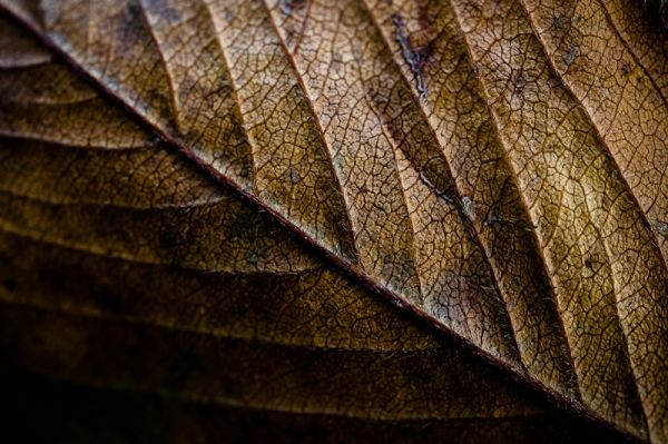 Fall leaf texture