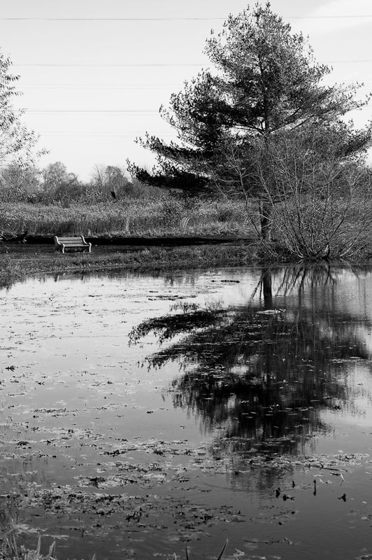 Pondside Bench with pine tree reflection