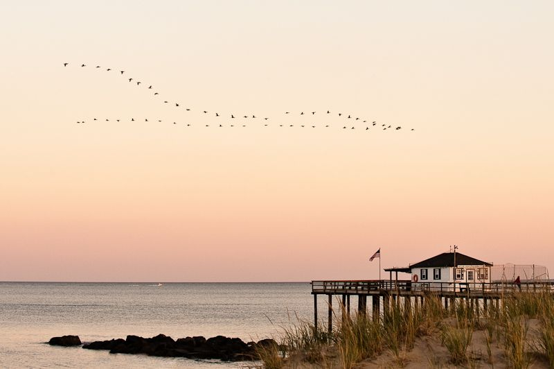 Geese flying south over the ocean