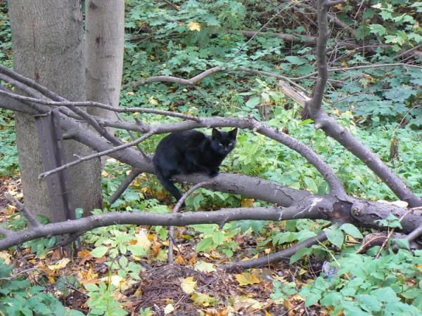 cat black autumm
