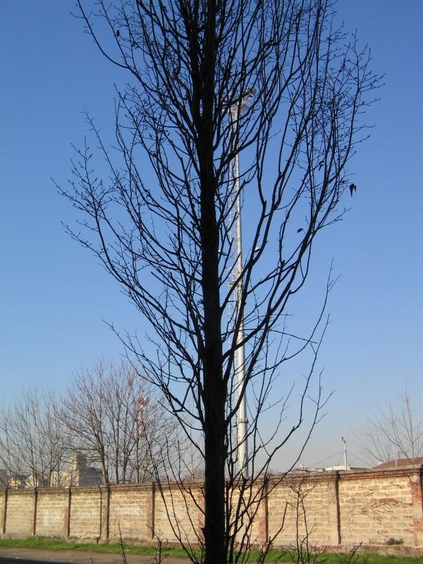 tall tree and a pole