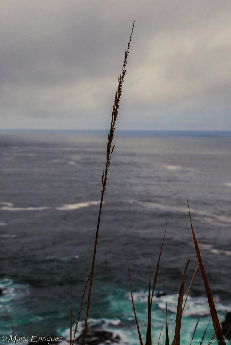 Ocean View monterey mcaenriquez norcal big sur