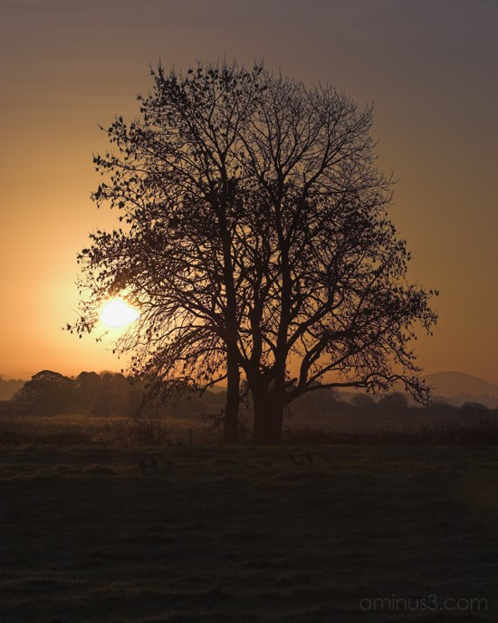 sunrise, winter, trees, ireland