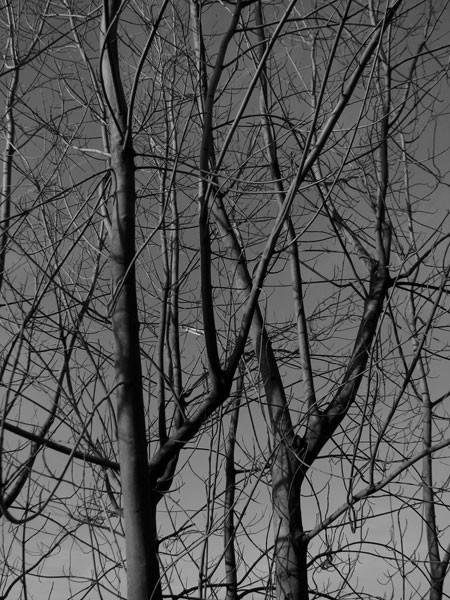tree lyon