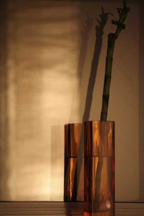 lacky bamboo