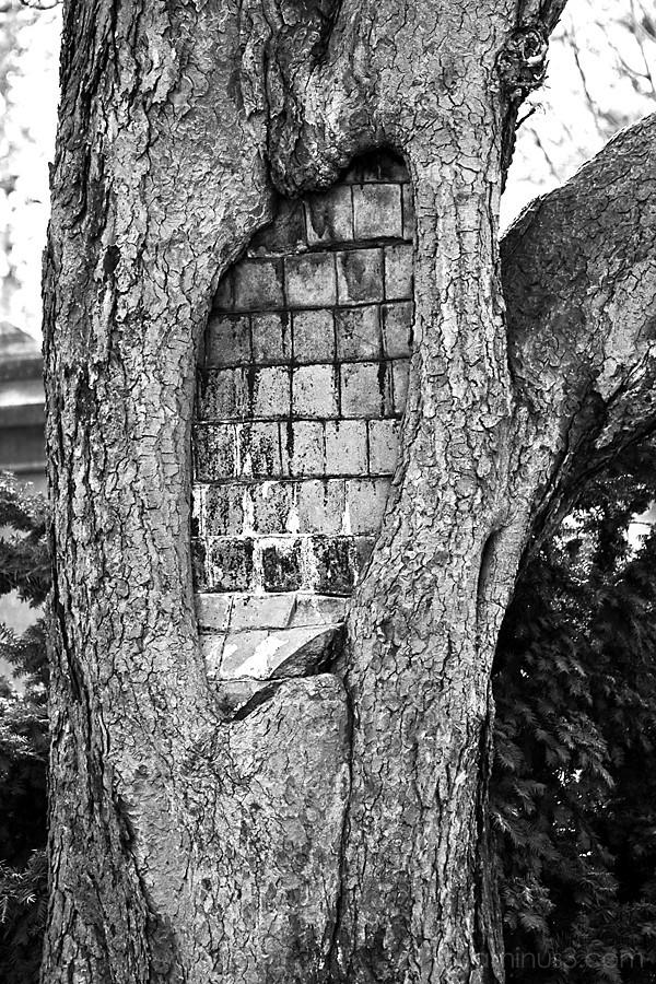 Weird tree!