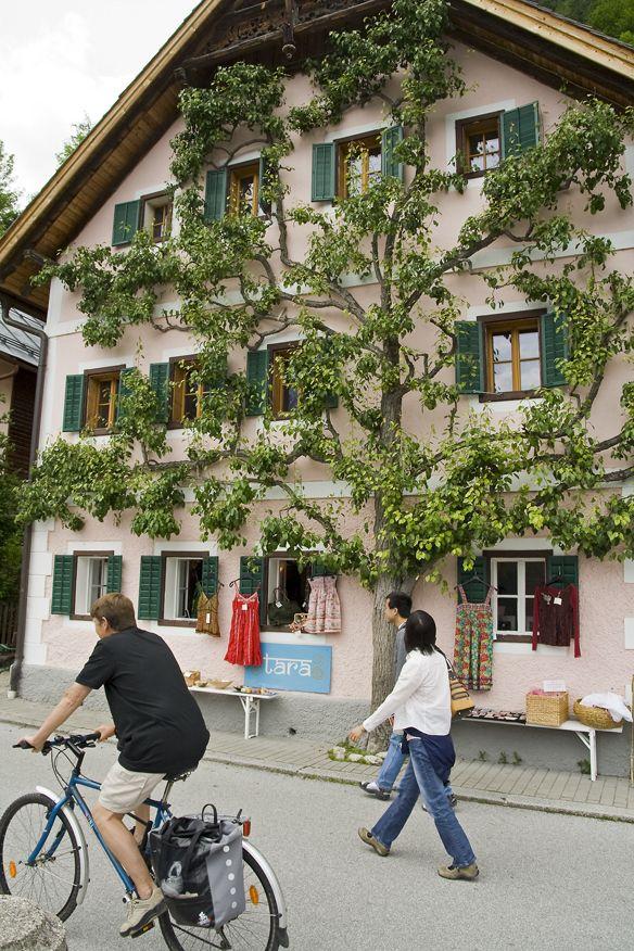 tree_facade_house