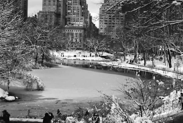 Central park pond
