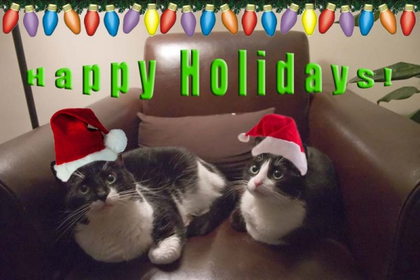 christmas kitties