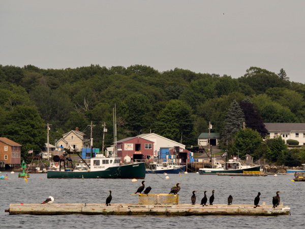 Cormorants, Boothbay Harbor, ME