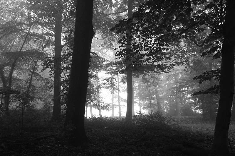 That foggy morning II