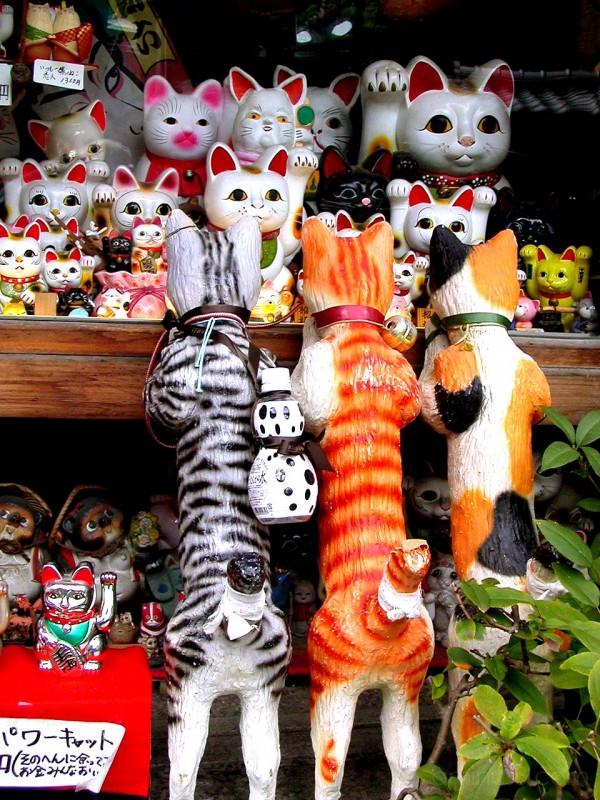 Window full of cats