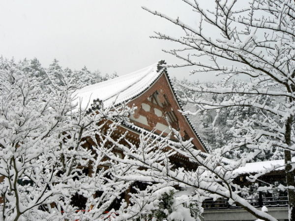 Temple rooftop and snowy branches