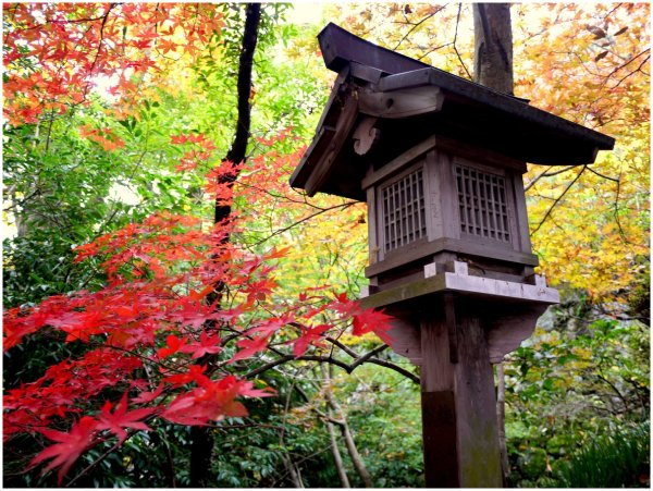 Japanese lantern with red maple leaves