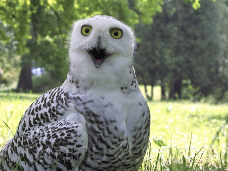 Real look of owl in kocovce, Children's day