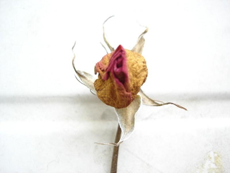 one flower plant