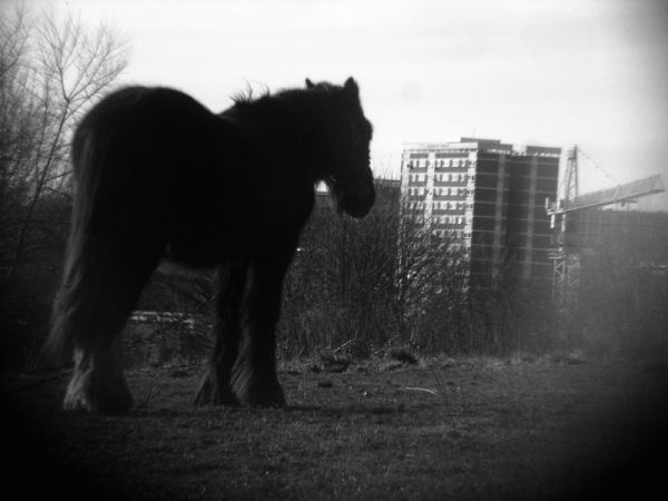 pony and the building and crane