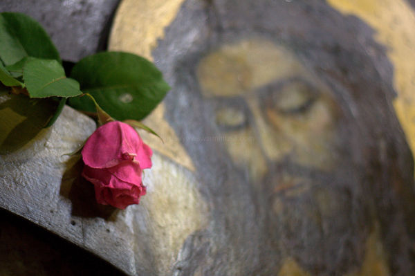 christ and the rose