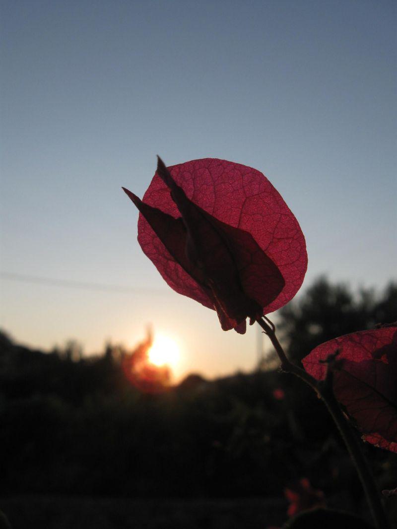 goodby sun