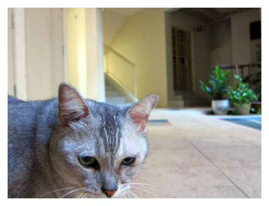 The friendly neighbourhood cat at Sengkang