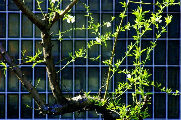 Tokyo: Spring Has Sprung