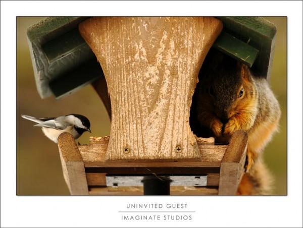 A finch and a squirrel share a birdfeeder