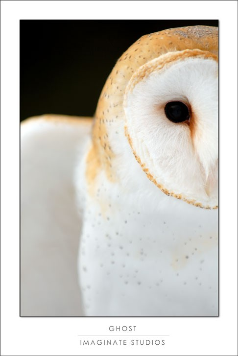 A snowy white owl profile