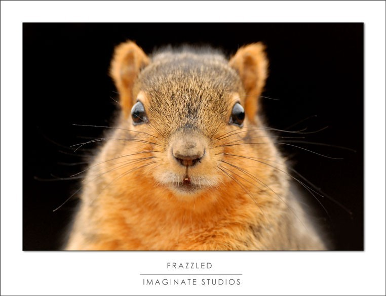 a squirrel looks frazzled by the camera
