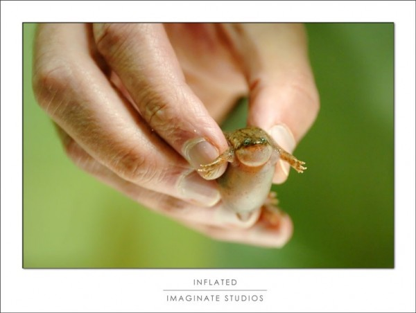 A frog with dropsy is examined