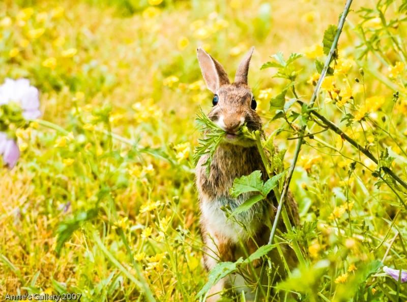 Tiny Bunny At Full Stretch