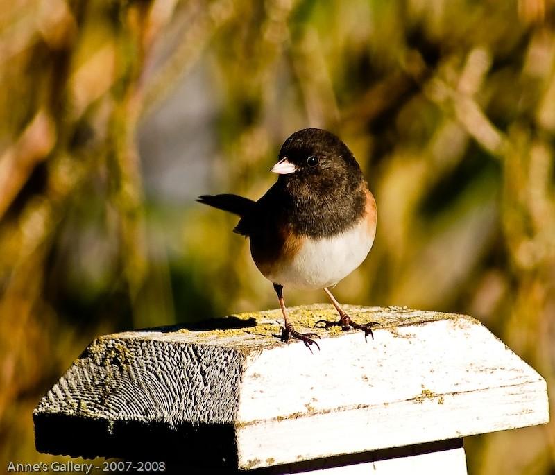 Little bird outside my window