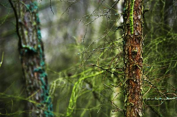woods, benno white photographer